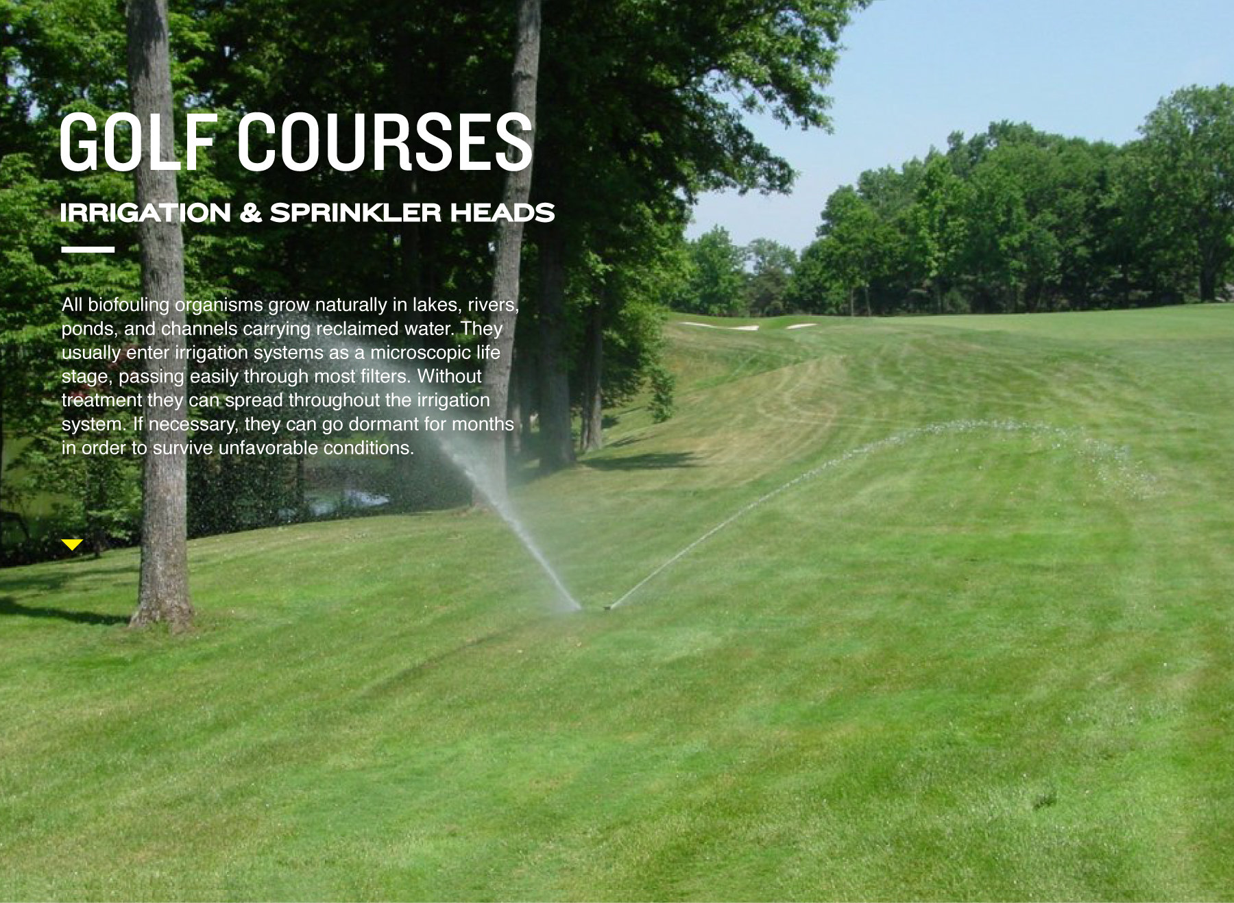 Golf Courses: Irrigation and Sprinkler Heads. All biofouling organisms grow naturally in lakes, rivers, ponds, and channels carrying reclaimed water. They usually enter irrigation system as a microscopic life stage, passing easily through most filters. Without treatment they can spread through out the irrigation system. If necessary, they can go dormant for months in order to survive unfavorable conditions.
