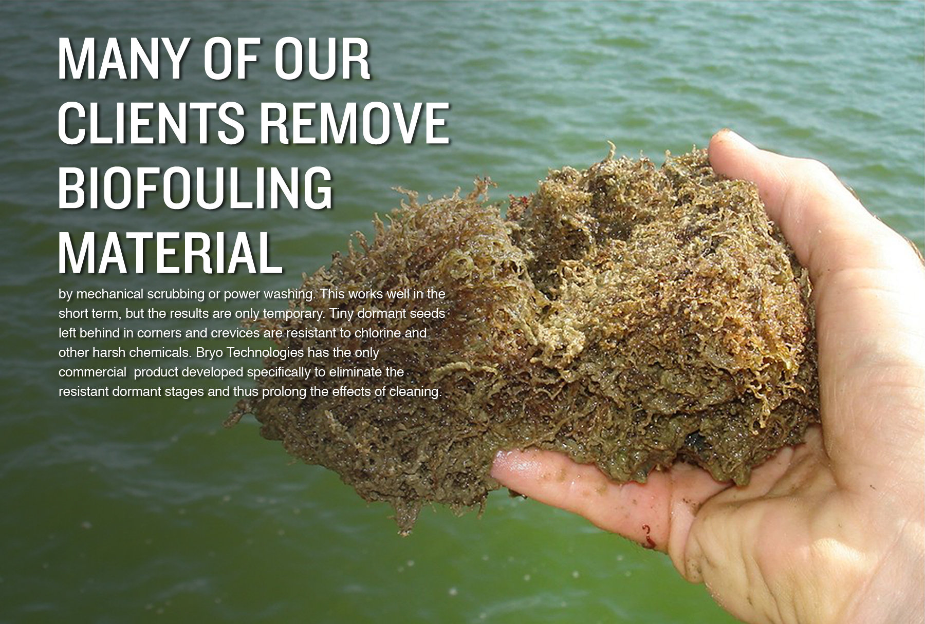 Bryo Technologies Wastewater: Many of our clients remove biofouling material by mechanical scrubbing or power washing. This works well in the short term, but the results are only temporary. Tiny dormant seeds left behind in corners and crevices are resistant to chlorine and other harsh chemicals. Bryo Technologies has the only commercial  product developed specifically to eliminate the resistant dormant stages and thus prolong the effects of cleaning.