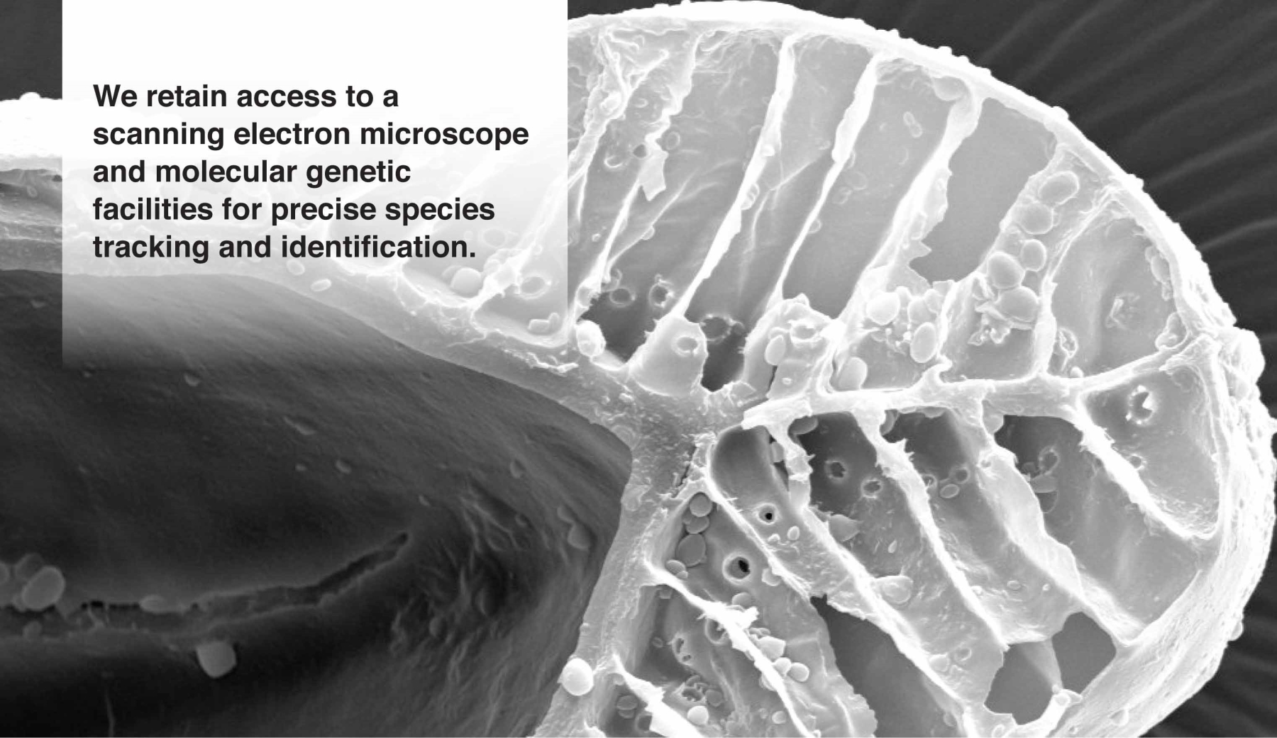 We retain access to a scanning electron microscope and molecular genetic facilities for precise species tracking and identification.