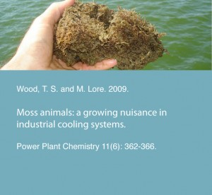 Wood, T. S. and M. Lore. 2009. Moss animals: a growing nuisance in industrial cooling systems. Power Plant Chemistry 11(6): 362-366.