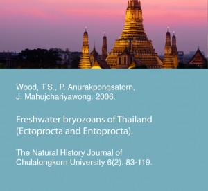 Wood, T.S., P. Anurakpongsatorn, J. Mahujchariyawong. 2006. Freshwater bryozoans of Thailand (Ectoprocta and Entoprocta). The Natural History Journal of Chulalongkorn University 6(2): 83-119.