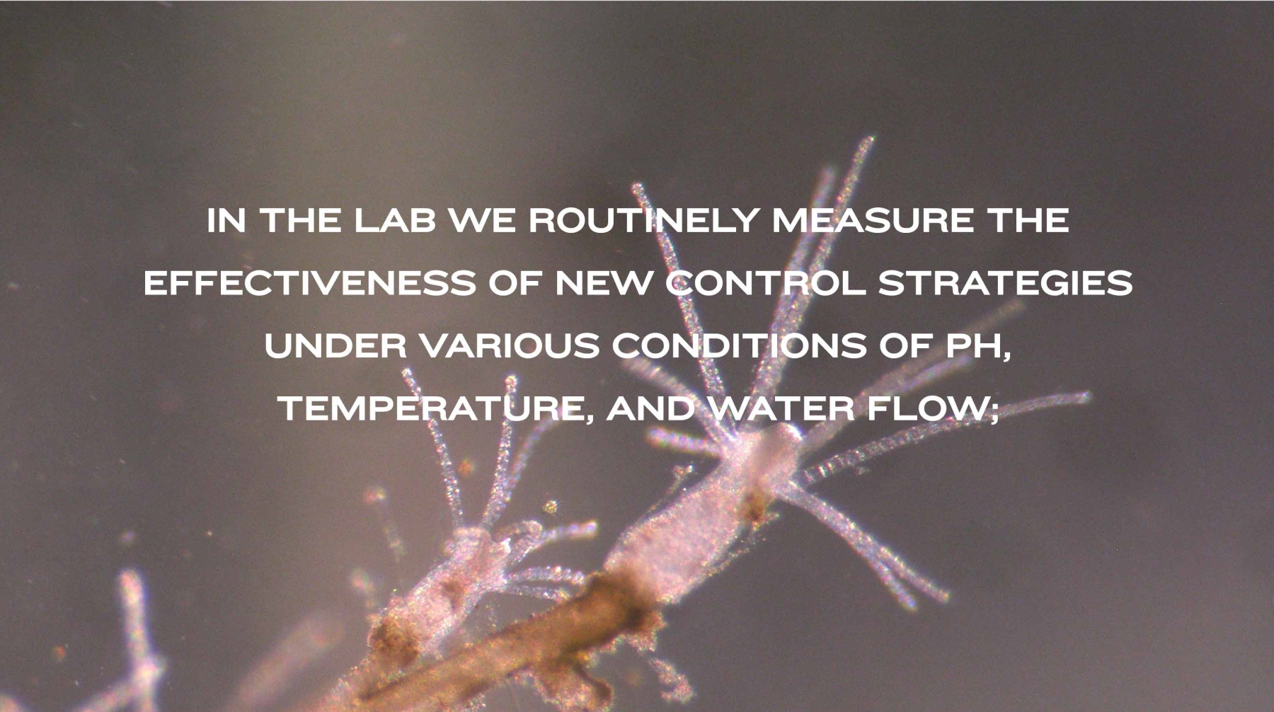 IN THE LAB WE ROUTINELY MEASURE THE EFFECTIVENESS OF NEW CONTROL STRATEGIES UNDER VARIOUS CONDITIONS OF PH, TEMPERATURE, AND WATER FLOW;
