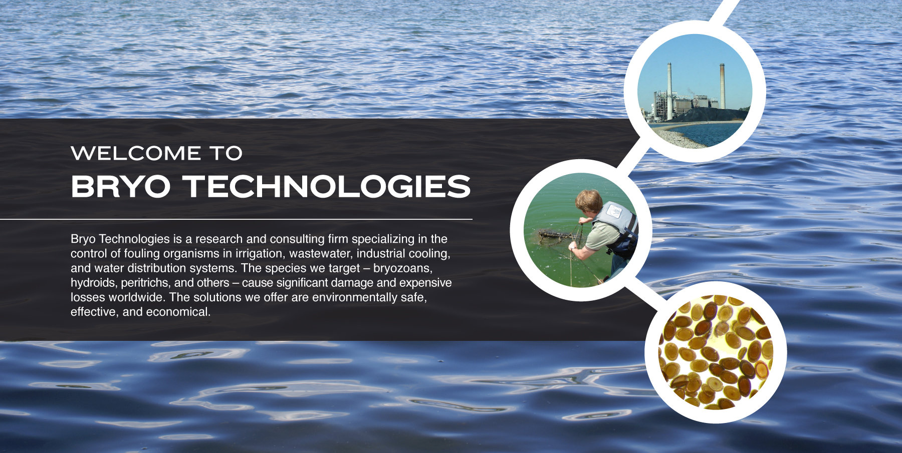 Bryo Technologies is a research and consulting firm specializing in the control of fouling organisms in irrigation, wastewater, industrial cooling, and water distribution systems. The species we target – bryozoans, hydroids, peritrichs, and others – cause significant damage and expensive losses worldwide. The solutions we offer are environmentally safe, effective, and economical.